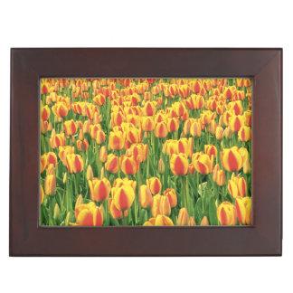 Spring tulips bloom in front of old barn. keepsake box