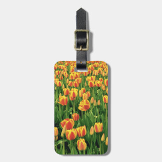 Spring tulips bloom in front of old barn. luggage tag