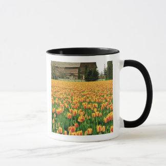 Spring tulips bloom in front of old barn. mug