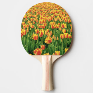 Spring tulips bloom in front of old barn. ping pong paddle