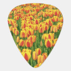 Spring tulips bloom in front of old barn. plectrum