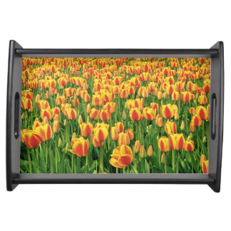 Spring tulips bloom in front of old barn. serving tray