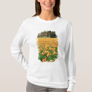 Spring tulips bloom in front of old barn. T-Shirt