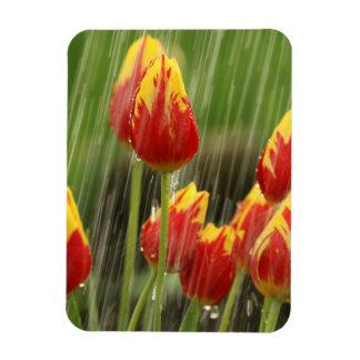 Spring Tulips Rectangular Photo Magnet