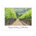 Spring Vineyard in Napa Valley California Postcard