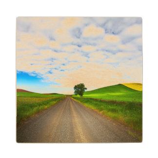 Spring Wheat and Canola Fields Wood Coaster