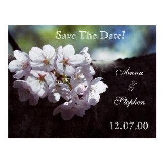 Spring white cherry blossom postcard