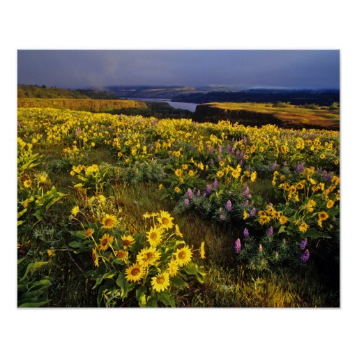 Spring wildflowers in abundance at the Tom Print