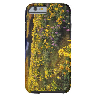 Spring wildflowers in abundance at the Tom Tough iPhone 6 Case