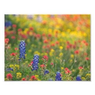 Spring Wildflowers Photo Print
