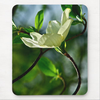 SPRING WITH DOGWOOD FLOWER IN SPOTLIGHT MOUSE PAD