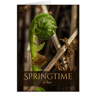 Spring Young fern rising CC0920 Beautiful nature Card
