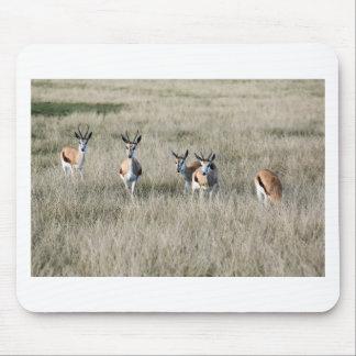 Springbok antelope mouse pad