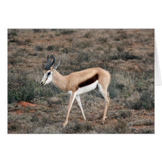 Springbok Card