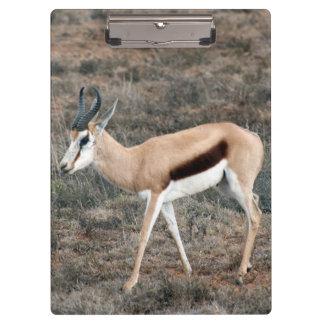 Springbok Clipboard
