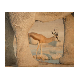 Springbok framed by elephant's legs wood prints