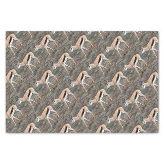 Springbok Tissue Paper