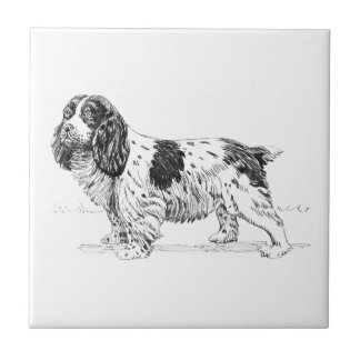 Springer Spaniel Bird Hunting Dog Breed Drawing Small Square Tile