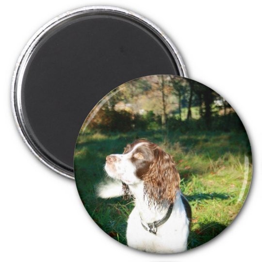 Springer Spaniel Dog Magnet