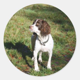 Springer Spaniel Dog  Stickers