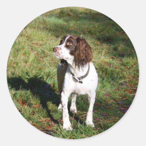 Springer Spaniel Dog  Stickers Round Stickers