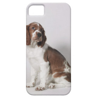Springer spaniel iPhone 5 covers