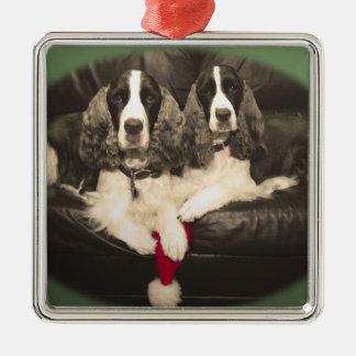 Springer Spaniels Ornament