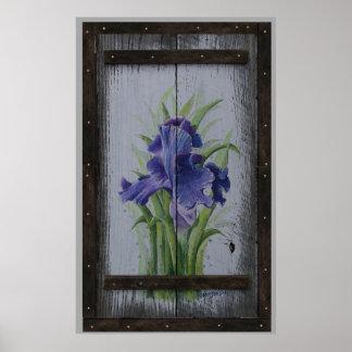 Springs Iris Poster