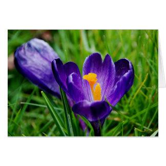 Springtime crocuses card