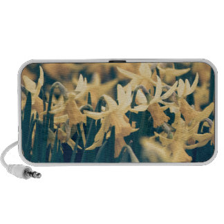 Springtime Daffodils iPod Speaker