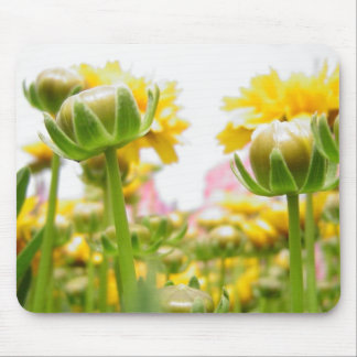 Springtime Flowers in Bloom Mouse Pad