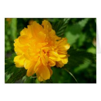 Springtime Garden Yellow Flower Bloom Photograph Cards