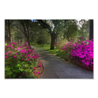 Springtime In Forsyth Park, Savannah Photo Print