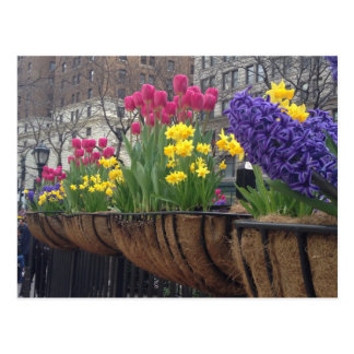 Springtime in Greeley Square NYC Postcards