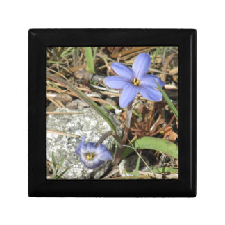 Springtime in the Mountains Purple Iris Flowers Small Square Gift Box