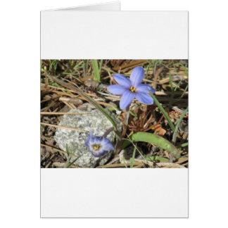 Springtime in the Mountains Purple Iris Flowers Greeting Card