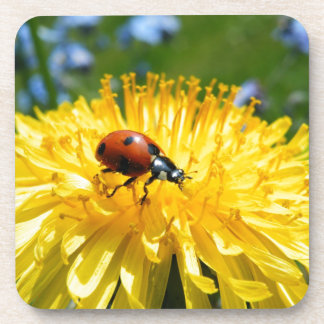 Springtime Ladybird on Dandelion Coasters