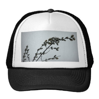 Springtime Pussy Willow Catkins Trucker Hats