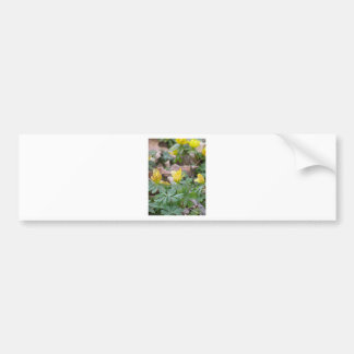 Springtime Yellow Woodland Flowers Car Bumper Sticker