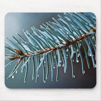 Spruce needles with water drops mouse pads