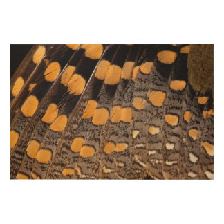 Sptted Snipe Feather Design Wood Wall Art