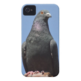 Spud the pigeon iPhone 4 Case-Mate cases