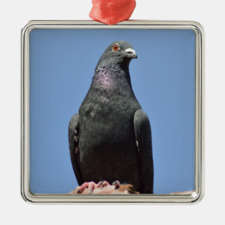 Spud the pigeon Silver-Colored square decoration