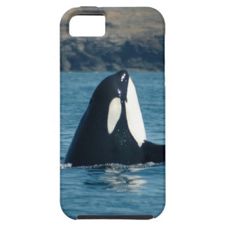 Spyhopping Orca iPhone Case Case For The iPhone 5