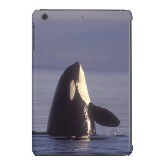Spyhopping Orca Killer Whale (Orca orcinus) near iPad Mini Retina Covers