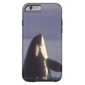 Spyhopping Orca Killer Whale (Orca orcinus) near Tough iPhone 6 Case
