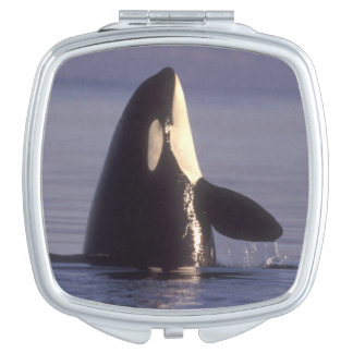 Spyhopping Orca Killer Whale (Orca orcinus) near Vanity Mirrors