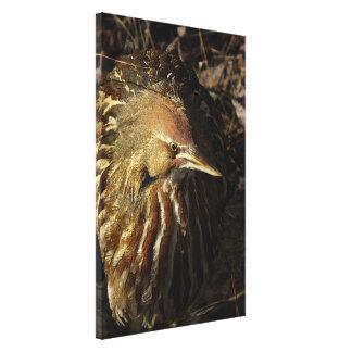 Squacco Heron Bird Wildlife Animal Refuge Stretched Canvas Print