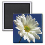 Square Daisy Magnet