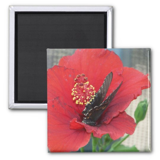 Square magnet with Butterfly on red flower